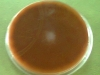 chocolate-agar-1