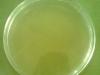 nutrient-agar-3